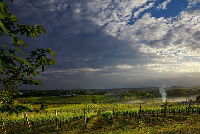 img-8746-ogliano-panoramica-con-vigneto-1-maggio-2012-mr